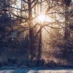 Frostiga regnbågsljus - reaktionista.se