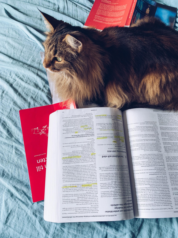 Asla läser socialrätt - reaktionista.se