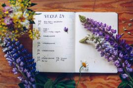 Bullet Journal vecka 24 - reaktionista.se